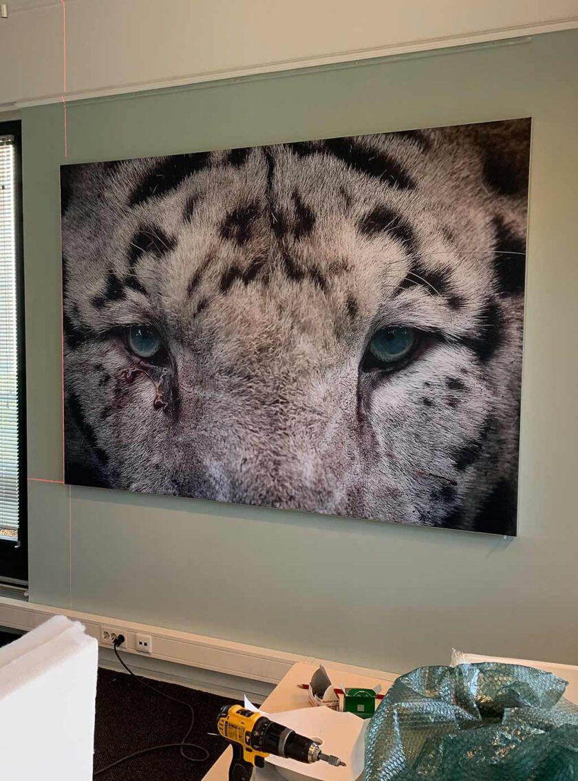 akoestisch paneel tijger wand kantoor